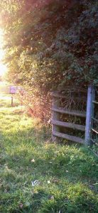 fence-and-fieldcropped